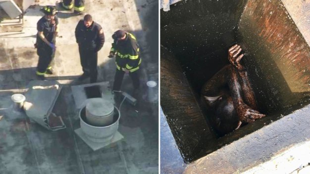 Calif. Man Rescued After 2 Days Stuck in Greasy Restaurant Vent