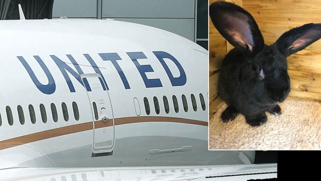 United Investigates Report That Giant Rabbit Died on Plane