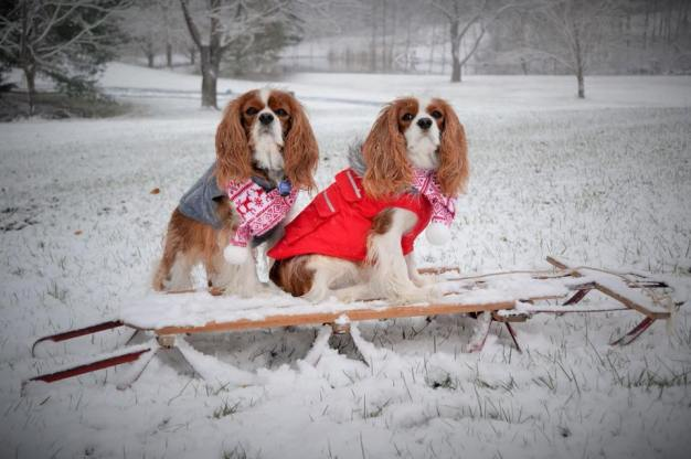 Local Pups Make Fashion Statement During DC's Arctic Freeze