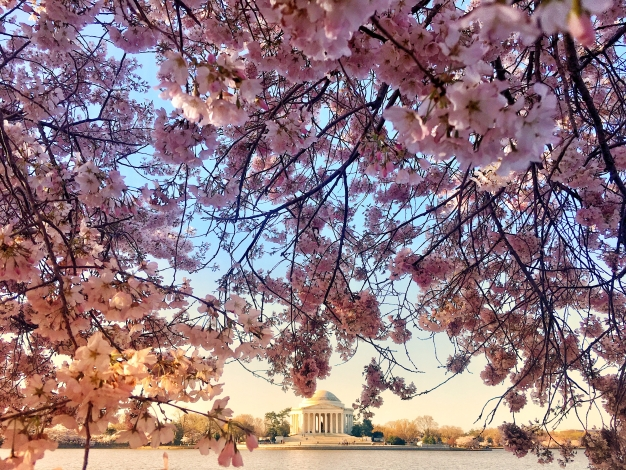 PHOTOS: Your Cherry Blossom Pics