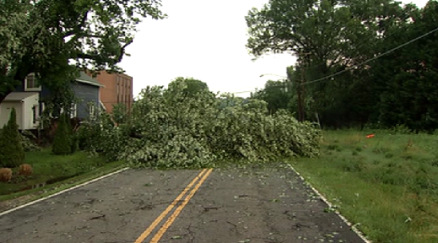 [DC] Overnight Storms Knock Down Trees, Block Roads