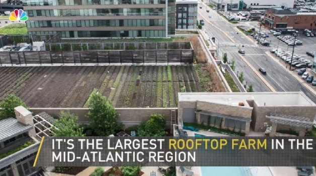 Pike and Rose Debuts Largest Rooftop Farm in Mid-Atlantic