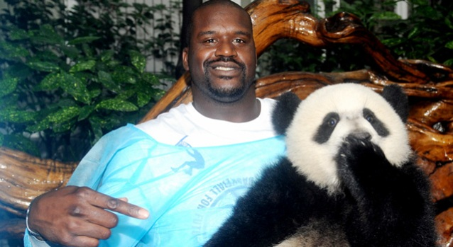 Shaq, Pandas Get Acquainted in China
