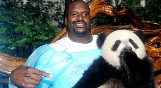 Shaq, Pandas Get Acquainted in China