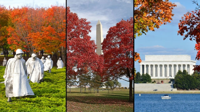 WHAT Cherry Blossoms? DC Is Utterly Gorgeous in Fall, Too