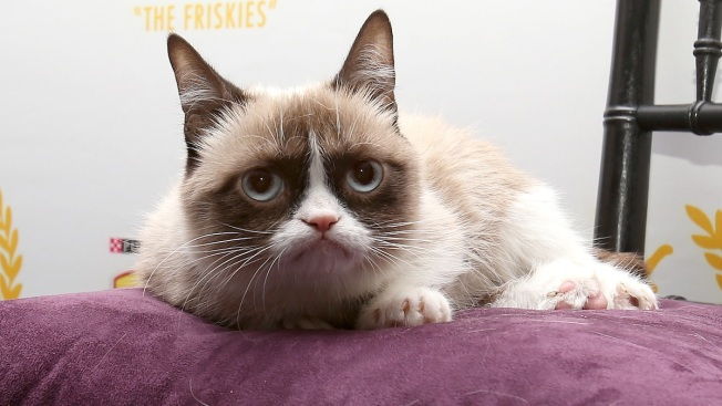 Feline Frenzy: Oct. 29 Marks National Cat Day