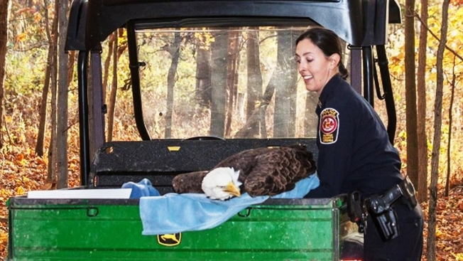 Injured Eagle Rescued by Fairfax Officer Has Been Euthanized