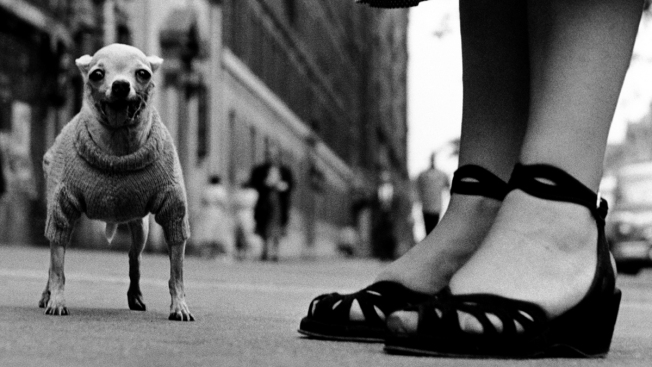 "A ""Dog Dogs""' World: Photographs of Elliott Erwitt"