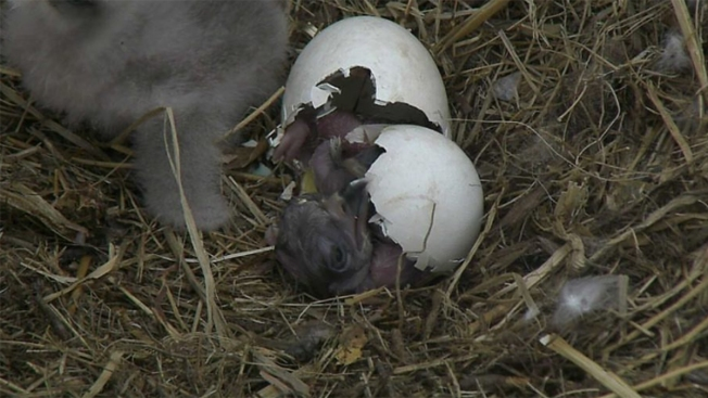 The Results Are In: National Arboretum Eaglets Get Names