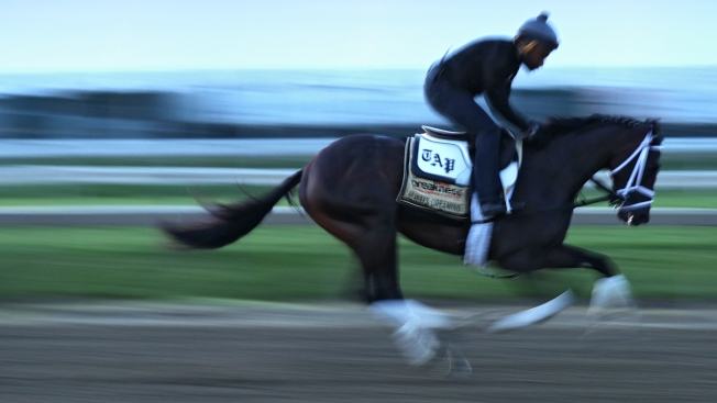 Always Dreaming drawn four of ten in Preakness Stakes