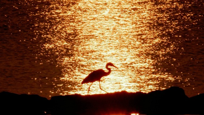 Report: Chesapeake Bay Health Improves, But Long Way to Go