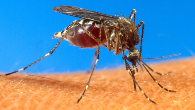 Debilitating Mosquito Virus Contracted by 3 Long Island Patients: Officials