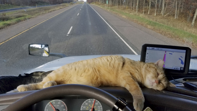 Trucker's Cat, Thought Missing in Ohio, Reappears 400 Miles Away