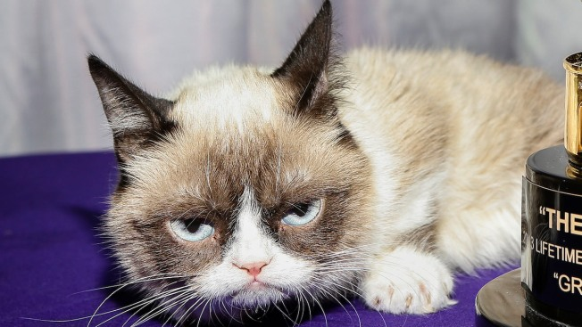 Grumpy Cat Given $700,000 in Lawsuit, Still Not Smiling