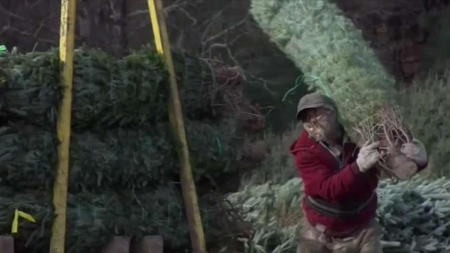Whats In The Amazon Box Maybe A Real 7 Foot Christmas Tree Nbc4