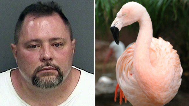 Flamingo Euthanized After Being Thrown at Fla.'s Busch Gardens