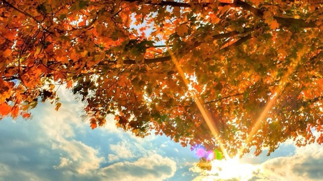 Experts expect worst season in years for fall foliage nbc4 4 to watch us goes for repeat sweep voltagebd Images