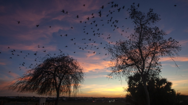 How Birdwatchers Can Help Bird Populations Threatened by Climate Change, Severe Weather
