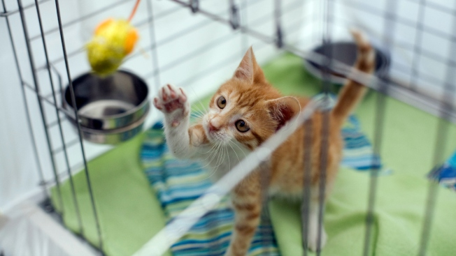 Adoption Fees Waived for Cats and Kittens at 16 Maryland Animal Shelters