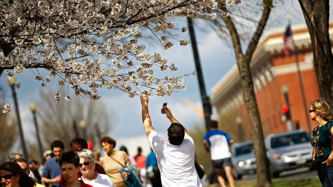 Cherry Blossom Festival 2018: 8 Key Events