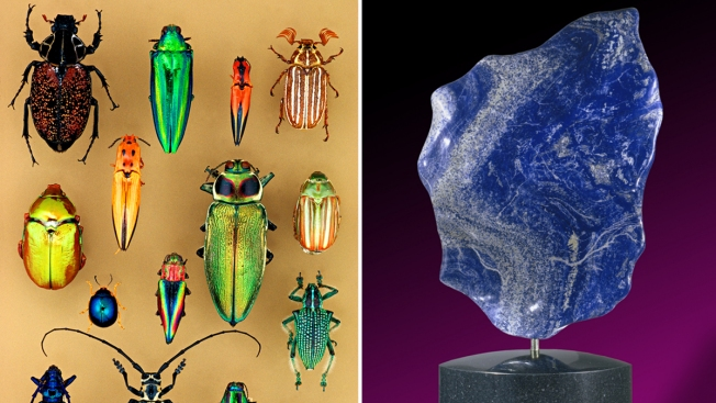 PHOTOS: Smithsonian Museum Opens 'Objects of Wonder' Exhibit Friday