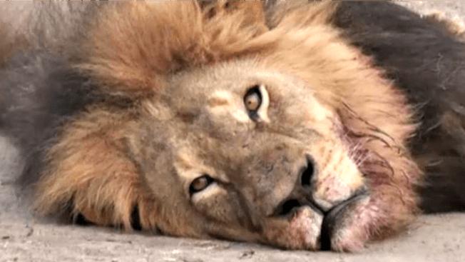 'Shame on Him': Stars Blast Minnesota Dentist Over Killing of Cecil the Lion