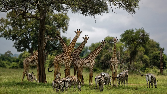 1 Million Species Face Threat of Extinction Because of Humans, United Nations Report Says