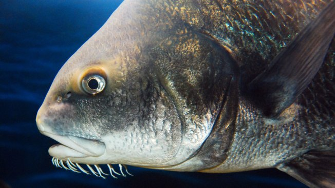 Feds Angle to Keep 'Codfather' Far Away From Seafood
