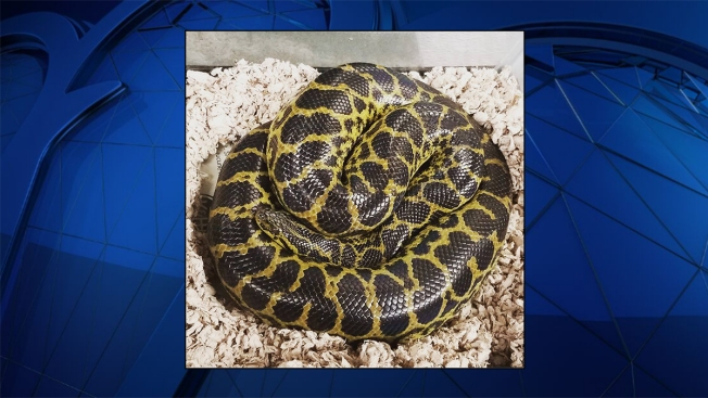 Snake in a Toilet! Arlington Woman Makes Startling Discovery