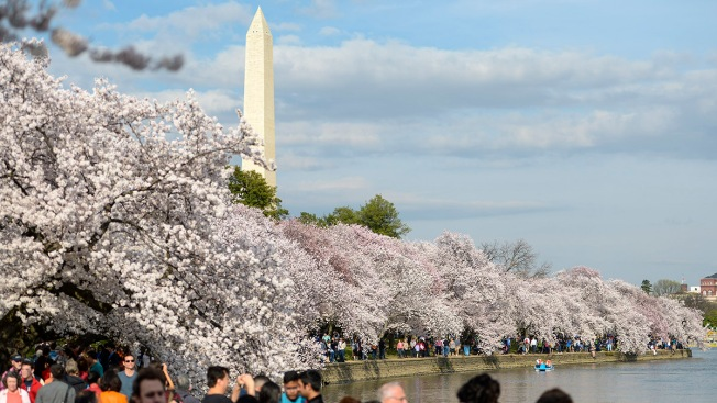 Cherry Blossom Festival Reschedules Opening Ceremony Due to March for Our Lives