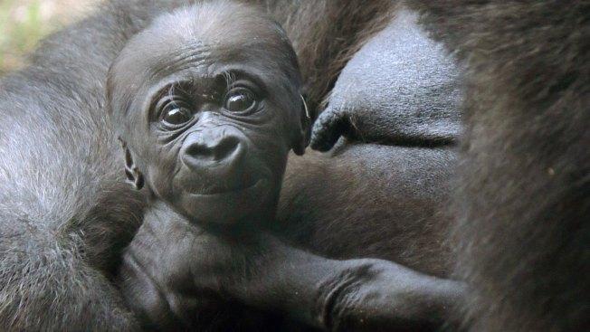 [NATL] Adorable Zoo Babies: Baby Elephant at the Houston Zoo