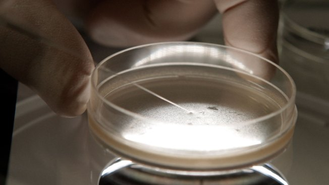 Oregon Scientists Do First Human Gene Embryo Editing in US