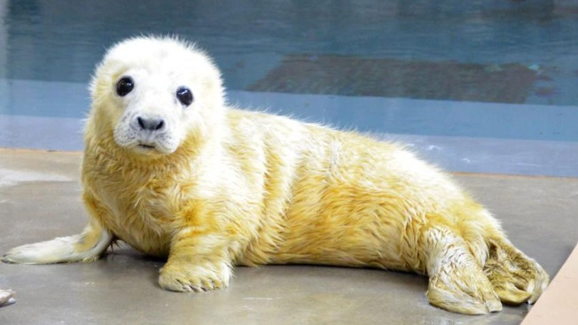 Seal Pup's Birth at National Zoo Inspires the Most Adorable Twitter War Ever