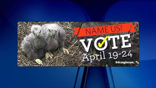 Vote to Name Eaglets at National Arboretum