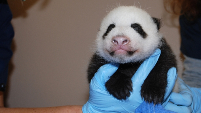 [NATL-DC] PHOTOS: Bao Bao Through the Years