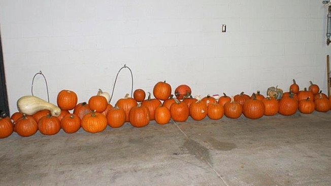 Police Post 'Pumpkin Lineup' After Stolen Squash Bust