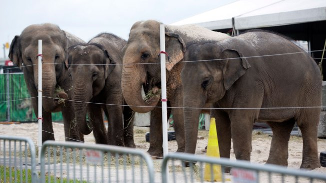 Ringling Bros. circus elephants to retire in May