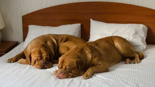 Celebrate National Dog Day at a Dog-Friendly Hotel