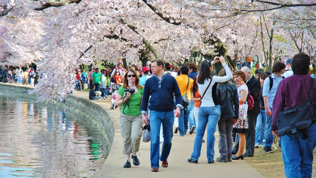 Cherry Blossom Festival: Here's Your List of Key Event Dates for 2017