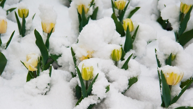 Spring Is Almost Here... Or Is It? (Spoiler Alert: Snow Could Be Back)