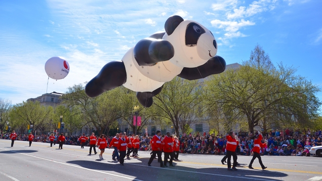 National Cherry Blossom Festival Parade Seeks Performers