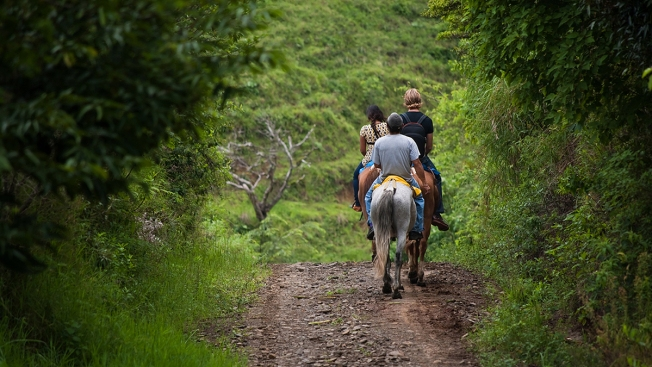 Hit the Trails: Horseback Riding in Shenandoah National Park