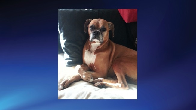 10-Year-Old Dog Found After Being Stolen by Burglar From Greenbelt Apartment