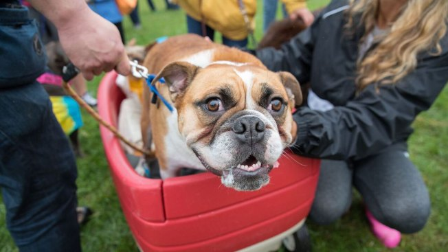 Support DC-Area Animal Shelters by Strutting Your Mutt This Saturday