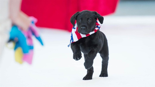 It's Charlie! The 'Today' Show Puppy Has a Name