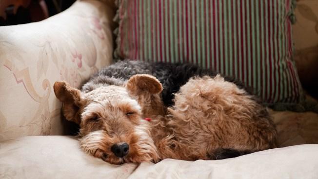 [NATL] 11 of the Best Dog Breeds for Senior Citizens