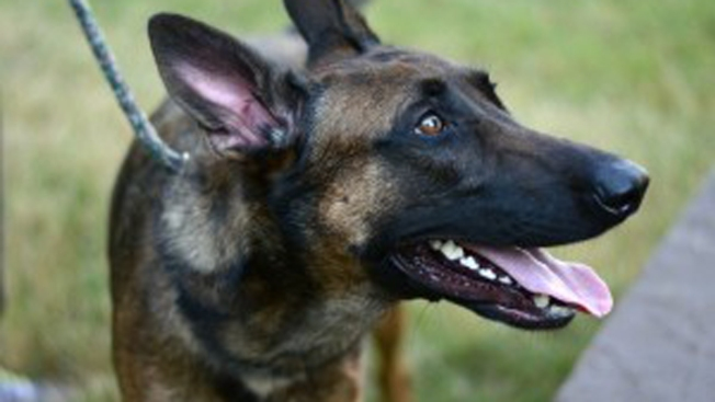 Shelter Dog Joining Alexandria Police K-9 Unit