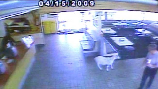 So, a Goat Walks into a Carl's Jr...