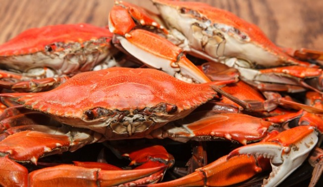 Celebrate Your Maryland Pride at National Harbor's Chesapeake Crab & Beer Festival