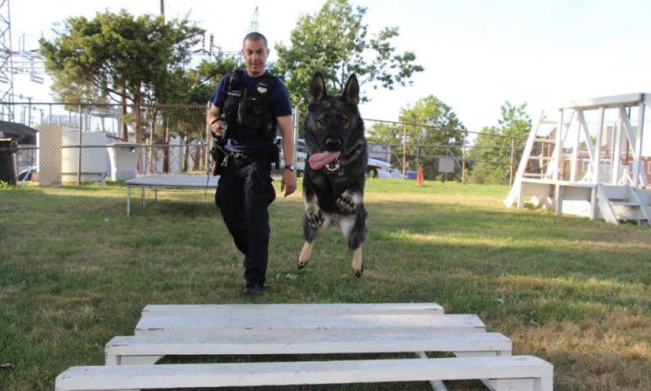 Nonprofit Donates Body Armor for Alexandria K-9s